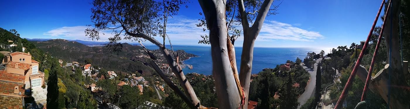 Vue depuis un eucalyptus au Trayas